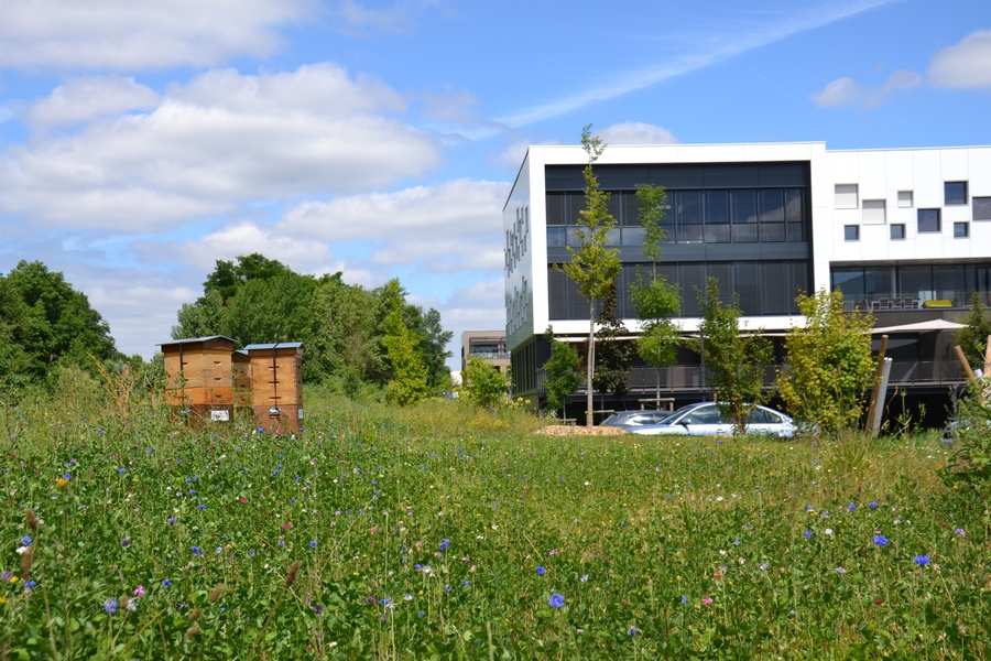 entreprise espaces verts Lyon